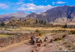 Sheep herder on our walk just outside of Huancarqui, Peru