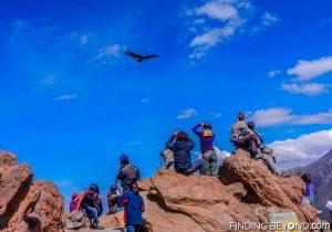 Condor watching at Colca Canyon, Peru