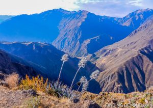 View from the top of Colca Canyon, Peru