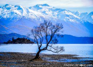 Isolated tree on the store of Lake Wanaka, New Zealand