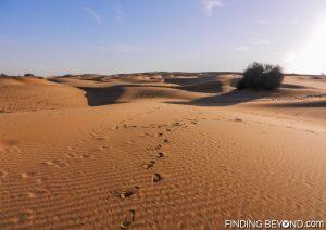 Fresh foot prints in the Thar Desert dunes