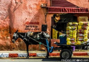 Horse and carts are still widely used in Marrakesh and the rest of Morocco.