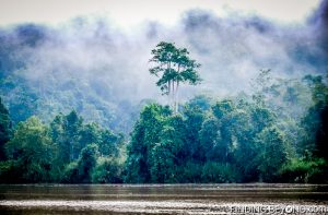 The misty morning river. Discovering Jungle Wildlife Along Borneo's Kinabatangan River.