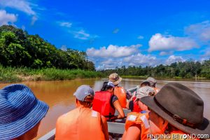 On the river looking for wildlife. .Discovering Jungle Wildlife Along Borneo's Kinabatangan River.