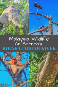 A stay on the banks of Borneo's Kinabatangan River is a fantastic experience to see the variety of Malaysia wildlife. Check out the animals we spotted!
