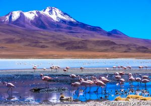 We saw hundreds of wild Flamingos on this trip.
