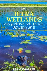 The remote town of Colonia Carlos Pellegrini in the Ibera wetlands in is a wonderful place to spot Argentina wildlife. Just don't get too close as we did!