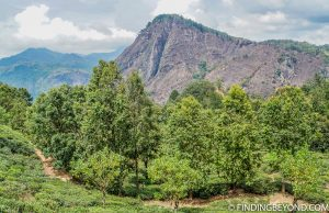 Across tea plantations to Ella Rock. Mountains in Sri Lanka - Little Adams Peak: A Photo Journey.