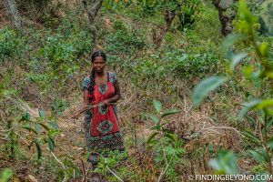 Local lady working in the tea plantations. Mountains in Sri Lanka - Little Adams Peak: A Photo Journey.