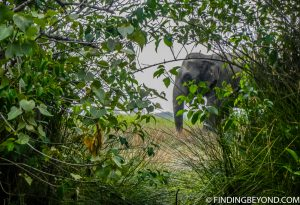 One of the elephants at the start of the tour. Pottuvil Lagoon and it's Elephant Inhabitants.