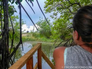 Shelley checking out an elephant. Pottuvil Lagoon and it's Elephant Inhabitants.