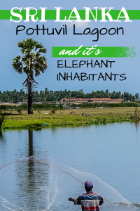 Our experience exploring Pottuvil Lagoon and getting too close to it's elephant inhabitants.