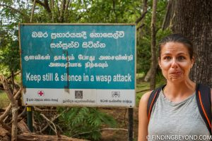 Wasp attack sign at Lion Rock in Sigiriya