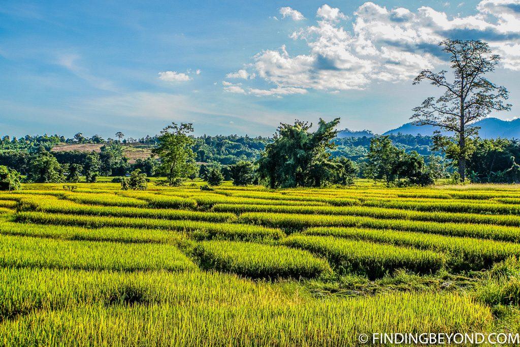 Pai rice fields