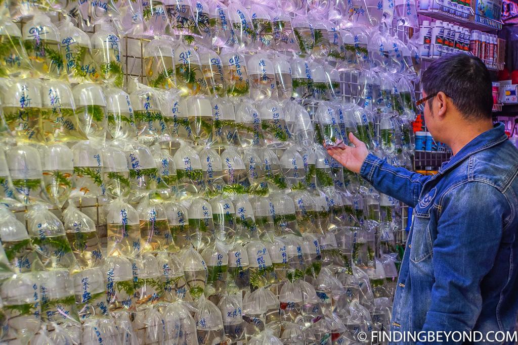 Things to do in Kowloon Hong Kong Goldfish Market