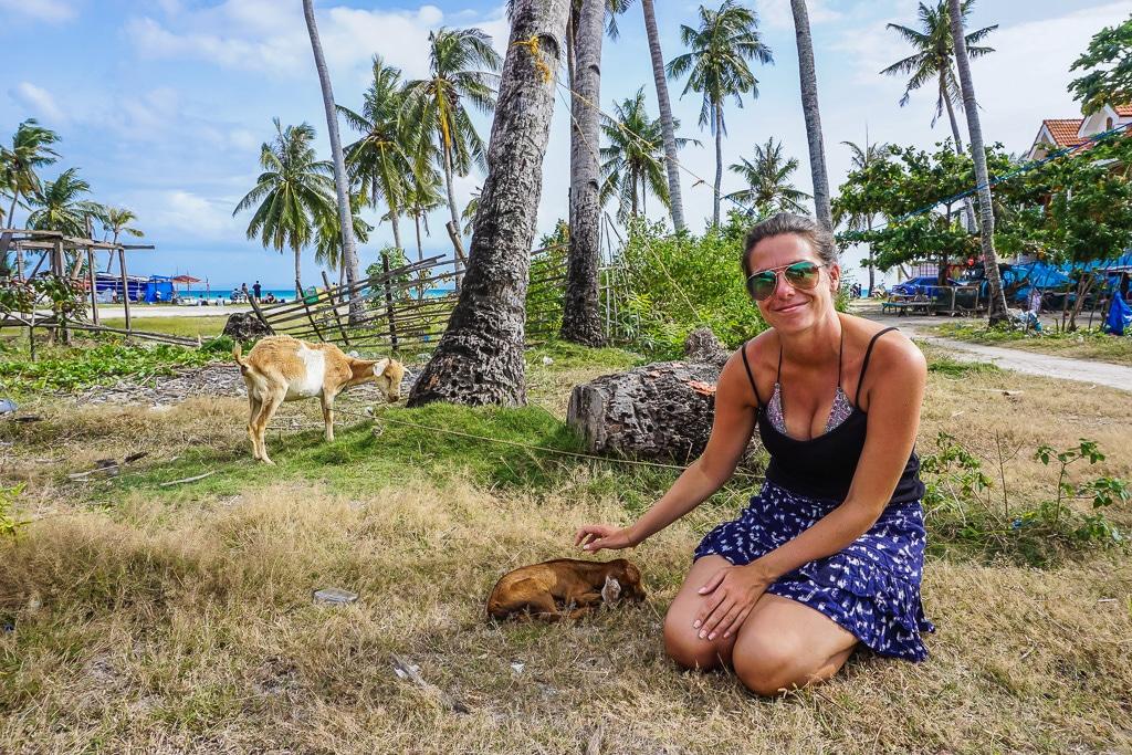 Baby goats on Santa Fe Beach, Bantayan Island, Cebu, Philippines