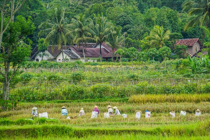 Image Result For Things To Do In Borobudur Yogyakarta