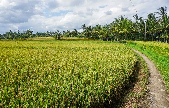 Ubud Rice Fields Walk