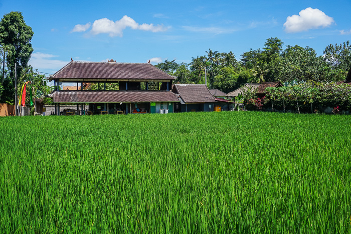penestanan village oasis cafe yoga