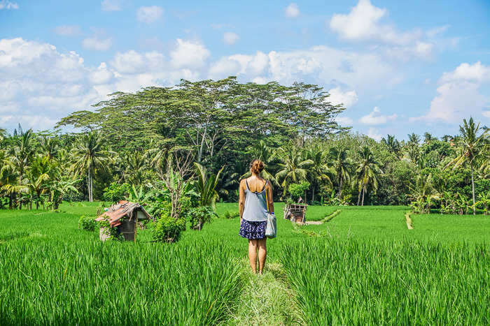 penestanan village rice fields