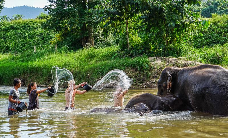 bathing elephants chiang mai