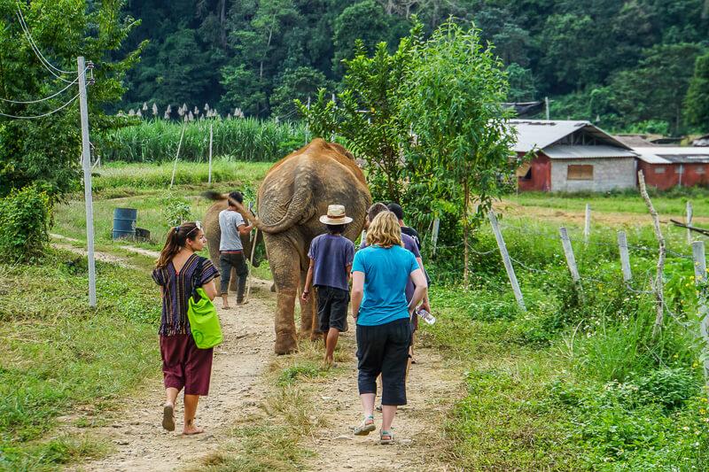 elephant walking chiang mai