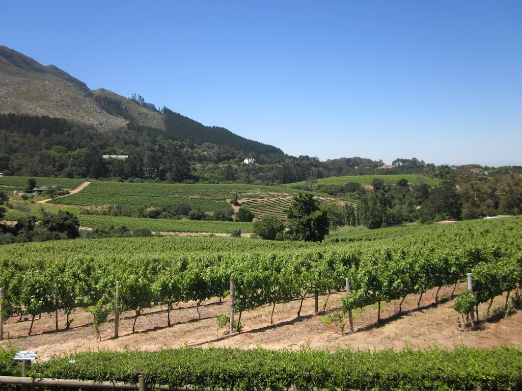 constantia wine valley cape town
