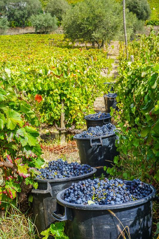 douro valley vine yard portugal