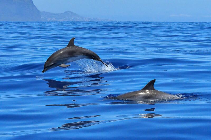 dolphin spotting lagos