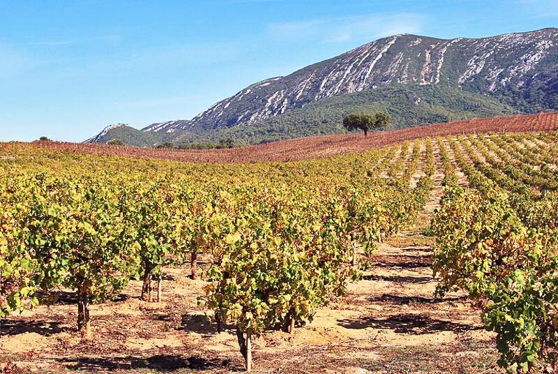 wine town of azeito portugal