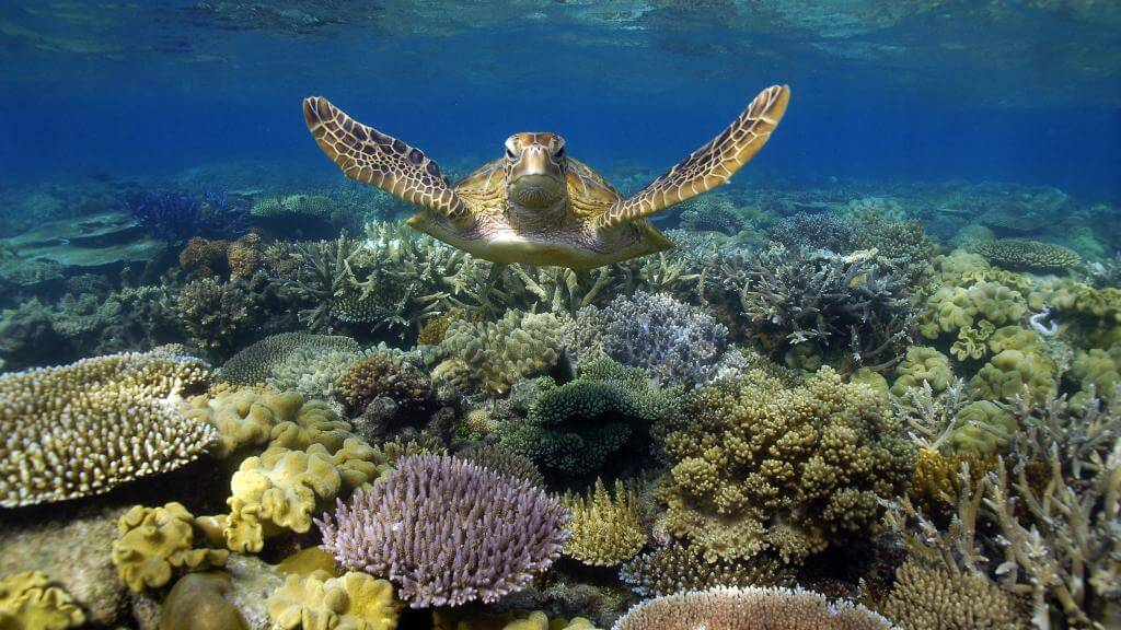 turtle-reef-great-barrier