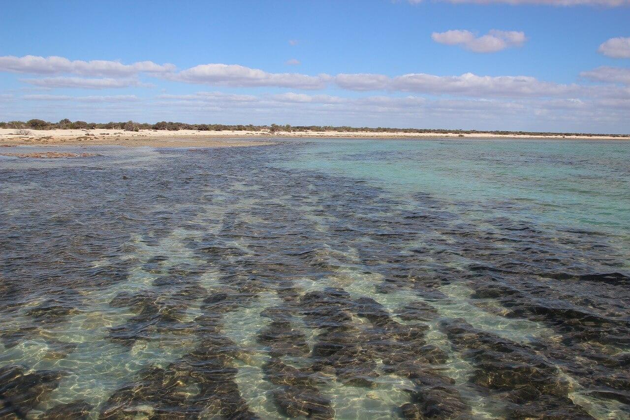stromatolites-shark-bay
