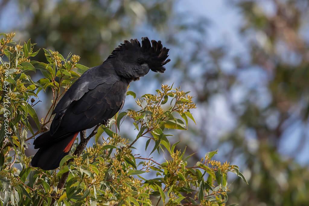 kings park perth birds