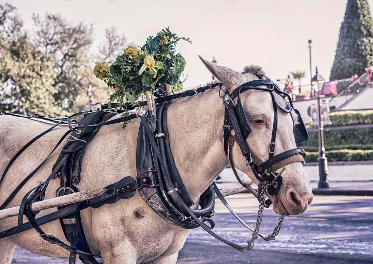 Sarajevo horse