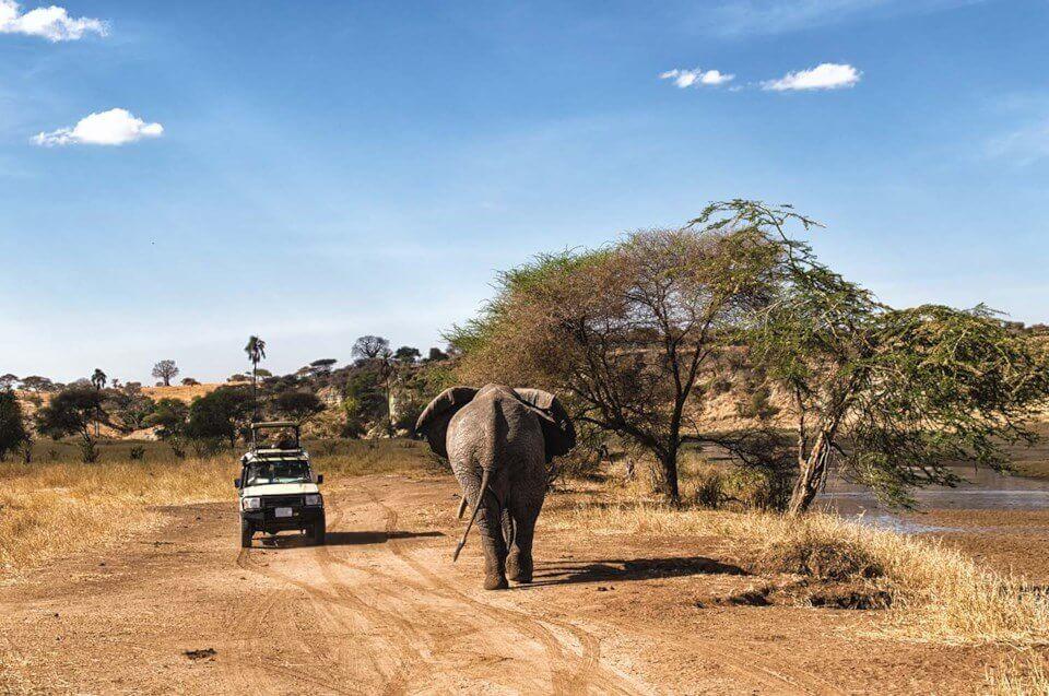 tanzania safari 4