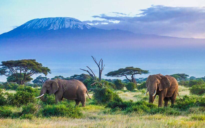 tanzania safari 5