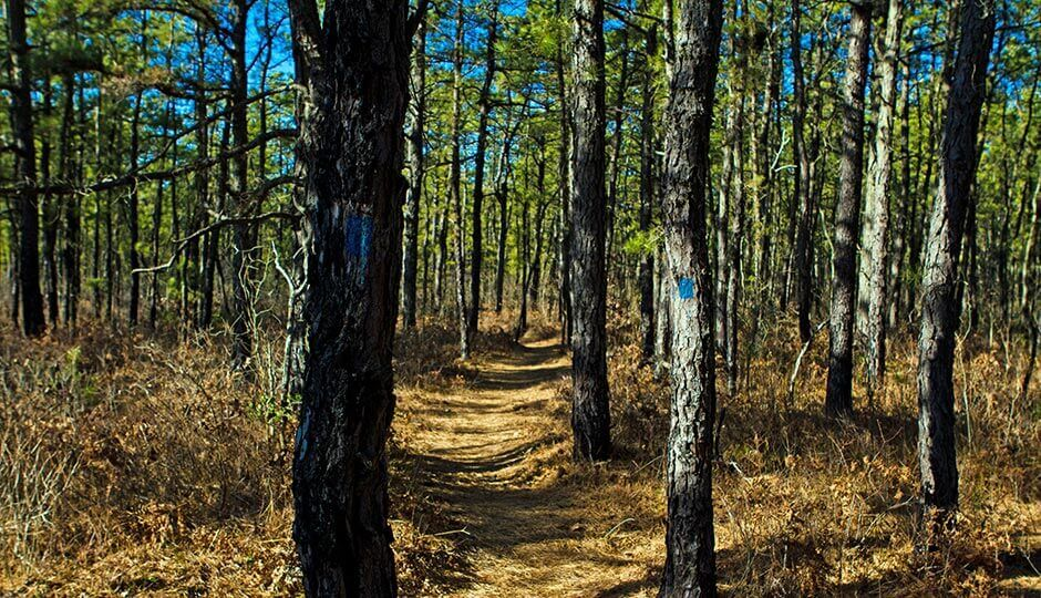 Pine Barrens road trip